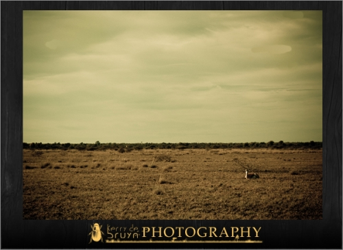 botswana2.jpg