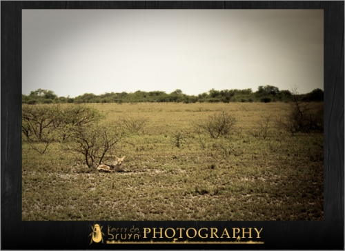 botswana8.jpg