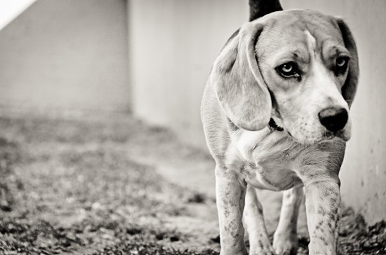 dog-photographer-westrand-15