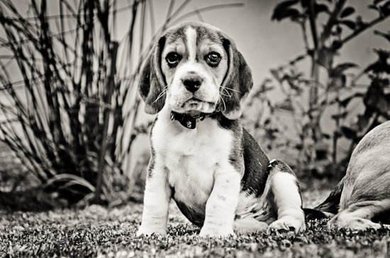 dog-photographer-westrand-24