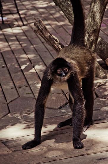 baraka-monkey-sanctuary-wedding-photographer-26