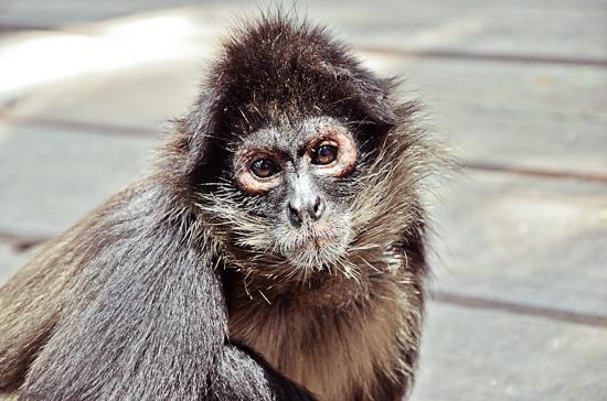 baraka-monkey-sanctuary-wedding-photographer-51