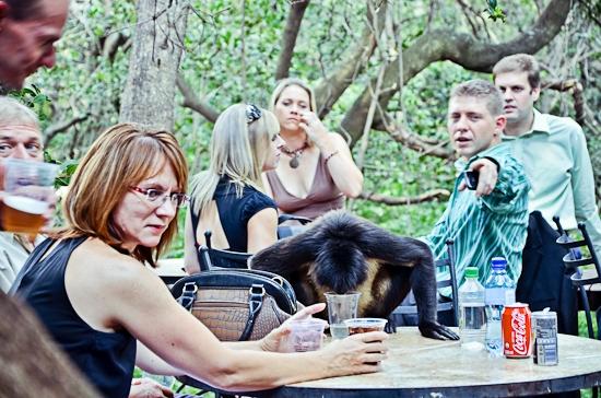 baraka-monkey-sanctuary-wedding-photographer-54