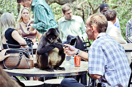 baraka-monkey-sanctuary-wedding-photographer-55