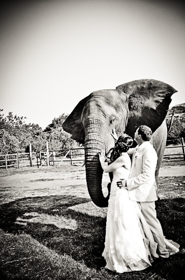 baraka-monkey-sanctuary-wedding-photographer-63