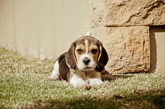 dog-photographer-westrand-1