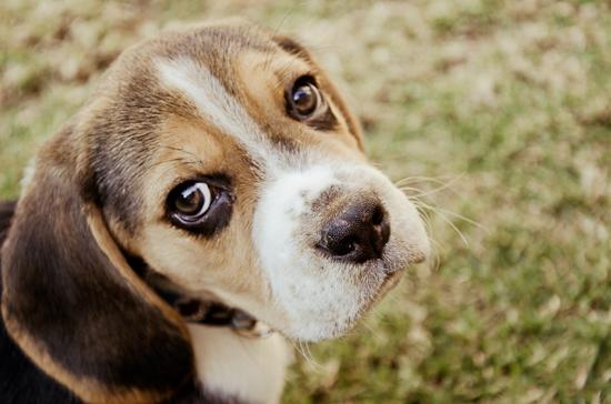 dog-photographer-westrand-14