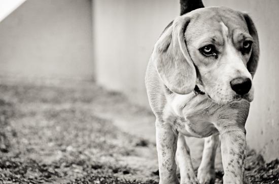 dog-photographer-westrand-15