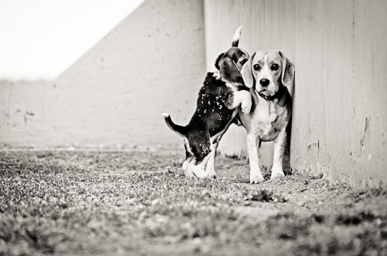 dog-photographer-westrand-18