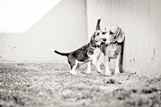 dog-photographer-westrand-19