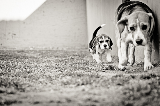 dog-photographer-westrand-20