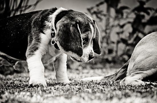 dog-photographer-westrand-21