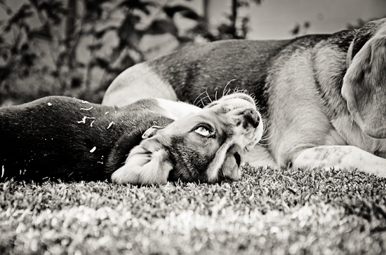 dog-photographer-westrand-22