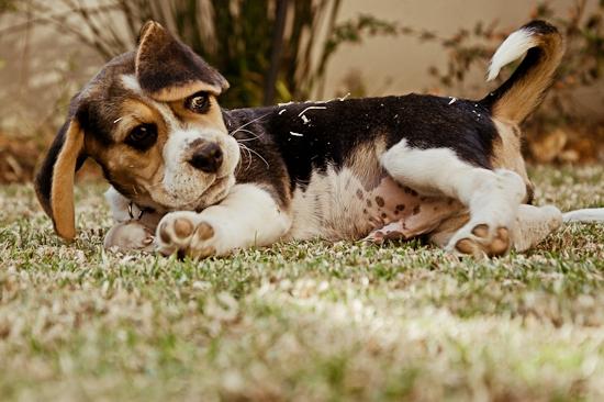 dog-photographer-westrand-23
