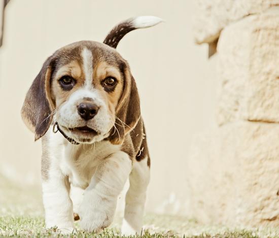 dog-photographer-westrand-3
