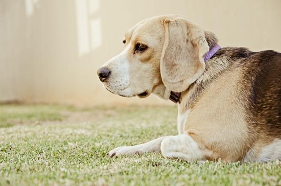 dog-photographer-westrand-5