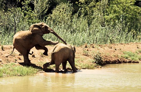 Cute Pics Of Elephants. elephants cute mammalsmar