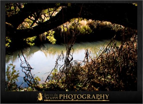 nature2.jpg