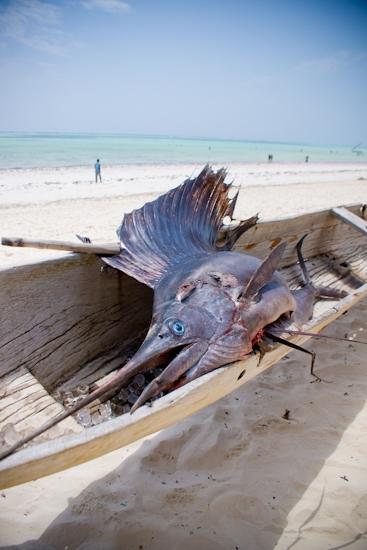 ocean-paradise-hospitality-photography-35