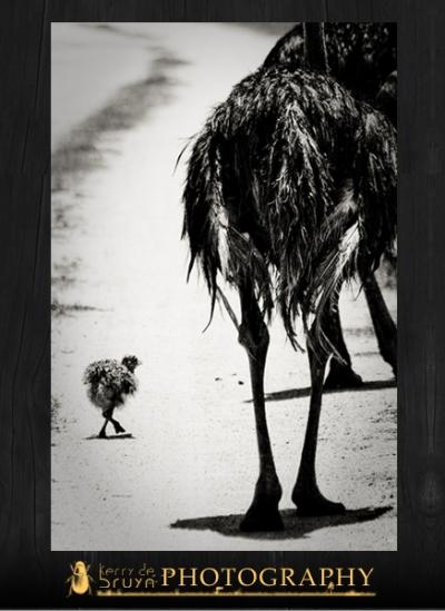 ostrich12.jpg