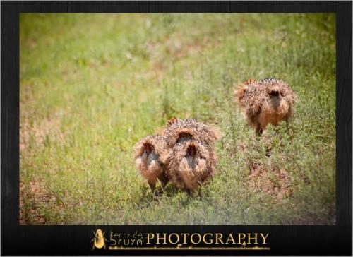 ostrich7.jpg