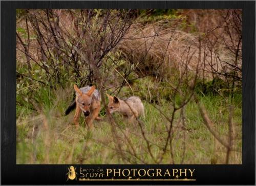 wildlife11.jpg
