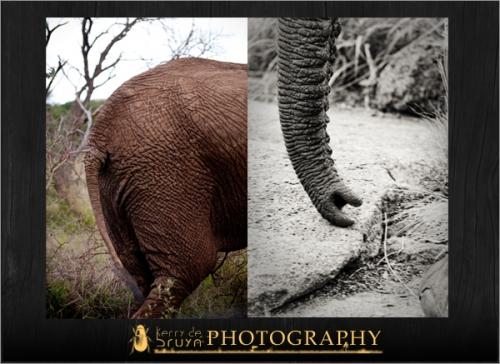 wildlife13.jpg