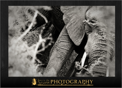 wildlife14.jpg
