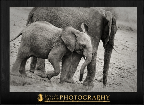 wildlife16.jpg