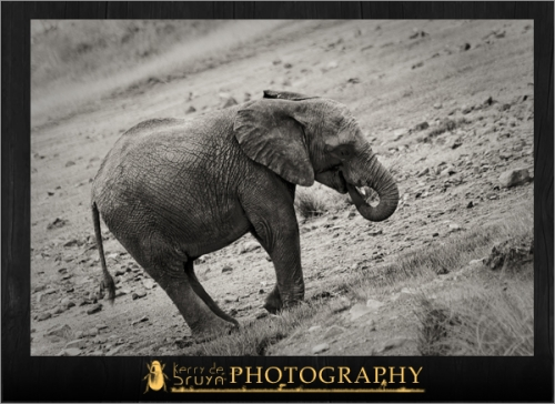 wildlife17.jpg