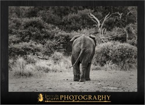 wildlife20.jpg
