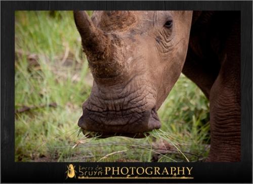 wildlife23.jpg