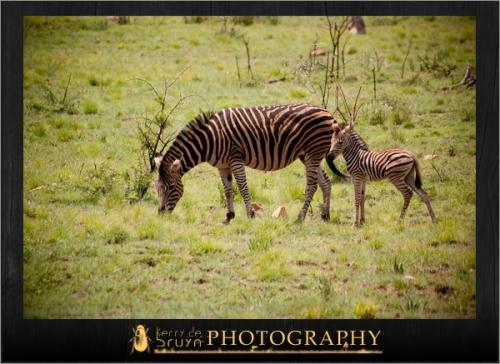 wildlife25.jpg