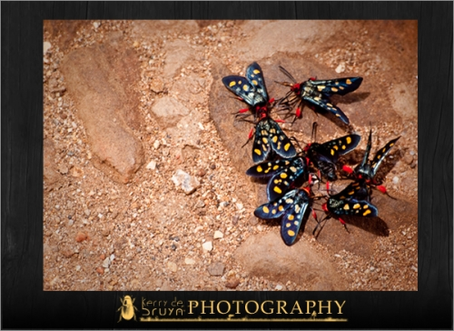 wildlife26.jpg