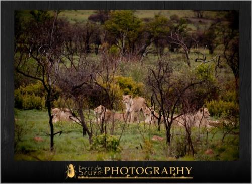 wildlife4.jpg