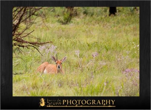 wildlife5.jpg