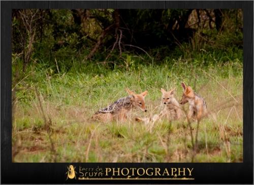 wildlife6.jpg