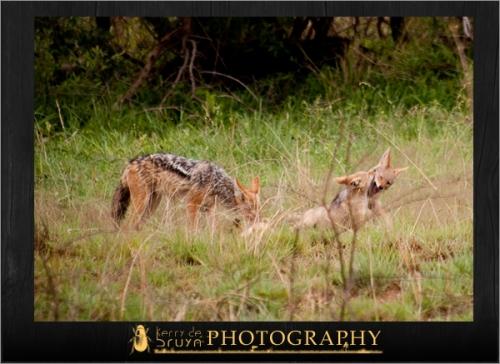 wildlife7.jpg
