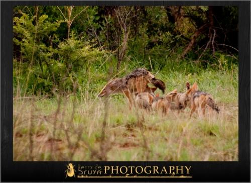 wildlife8.jpg