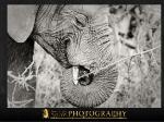 wildlife18.jpg