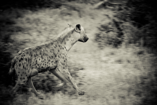 wildlife photography johannesburg