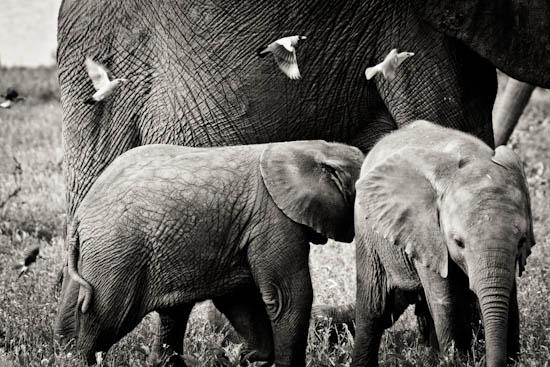 hospitality photography africa-1-2