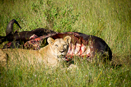 wildlifeand hospitality photography serengeti